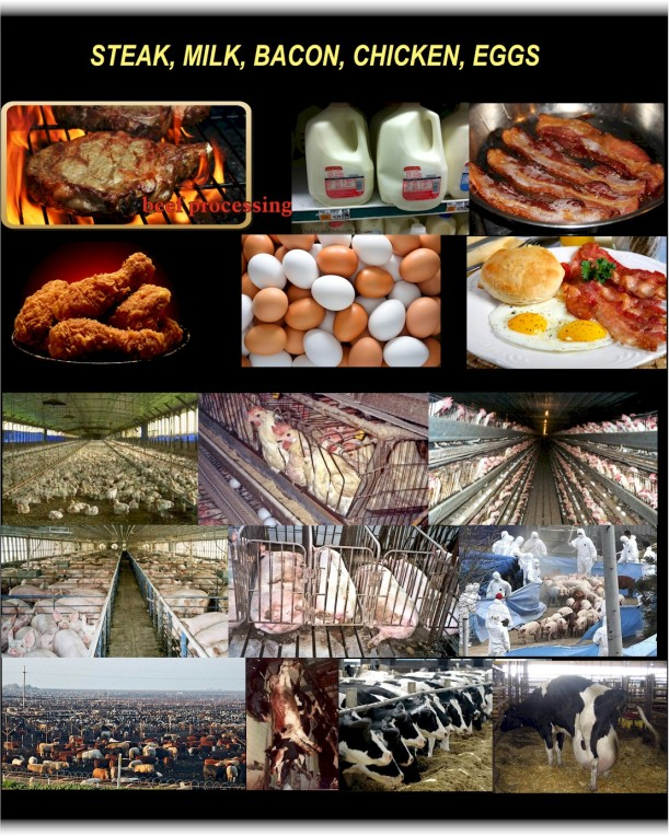 factory farming2